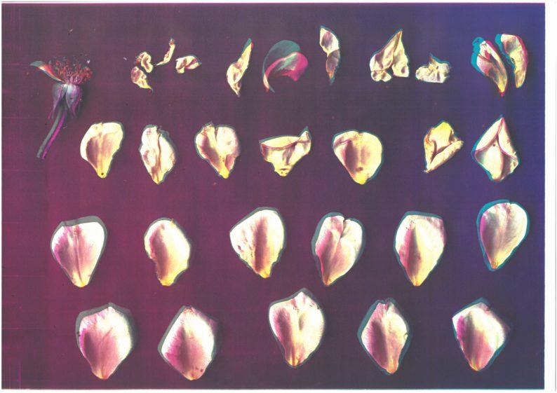 1_PH Versailles_Roses
