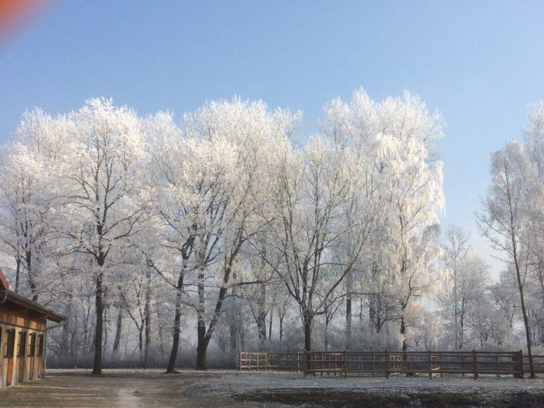 Dachauer Moos im Winter