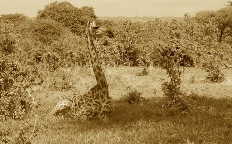Tanzania - Ruaha NP (2)