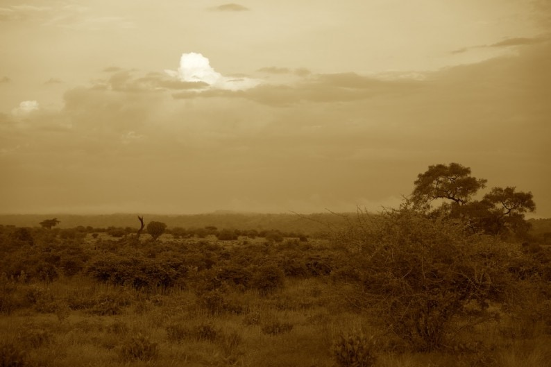 Tanzania - Ruaha NP - Abendhimmel